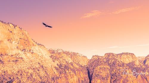 Condor over Angels Landing