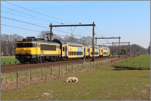 NS 1730 + DDAR 7343 - Colmschate