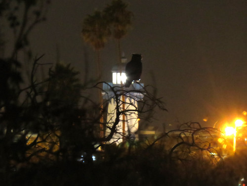 Scenic night with Great Horned Owl