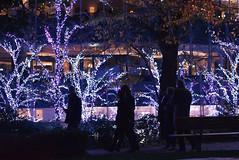 Garden illumination2019 Tokyo Midtown
