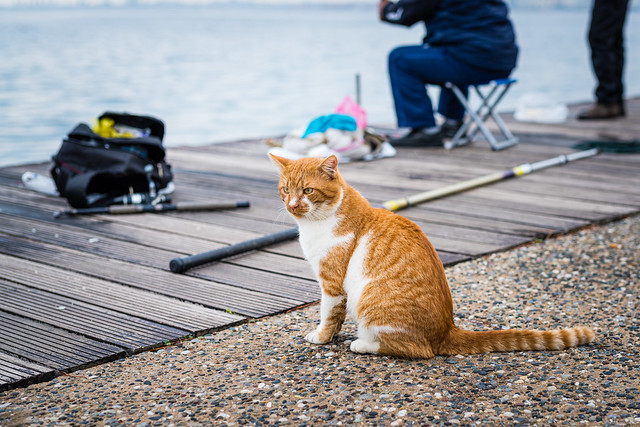 Waiting for the fish