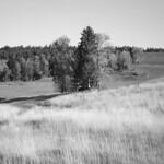 Uncut grass  (Portra 160)