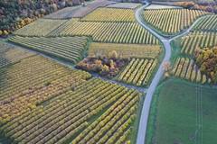 Irrigated apple trees, Sasse basin, Durance, France