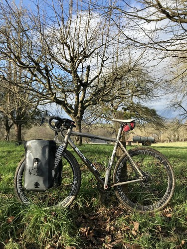 My annual personal mistletoe run ...