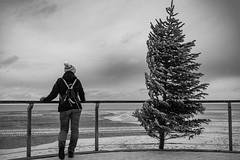 Christmas is close to the North Sea coast