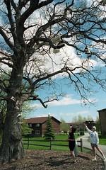 Shoe Tree 1994