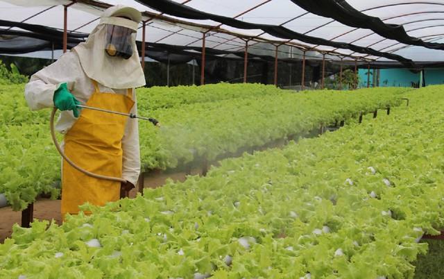 Número de amostras de alimentos contaminados com resíduos de agrotóxicos aumentou 17% em relação à pesquisa anterior - Créditos: Roberto Araújo/Governo do Amazonas