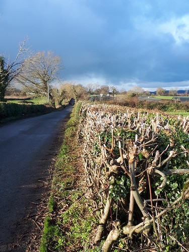 Cut hedgerows, Gowran, Co. Kilkenny