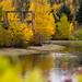Heart of Rundle Park; Edmonton, AB (Image 9)