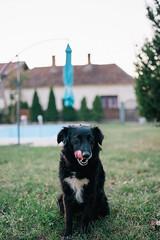 Portrait og black dog in the garden