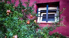 Granadas en la ventana