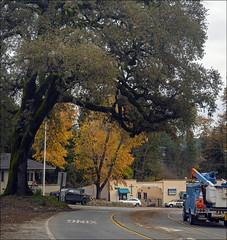 Late Fall in Ben Lomond, California