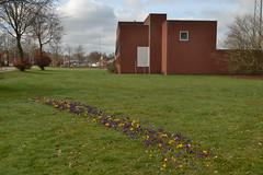 Bloemen op een wei in Ommen (136FJAKA_3133)