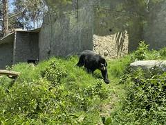AMARU Bioparque Zoológico Cuenca at 2,610 meters (8,562 ft) above sea level, the Southern Highlands, Ecuador.