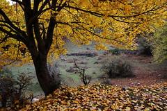 Last shot of the autumnal carpet