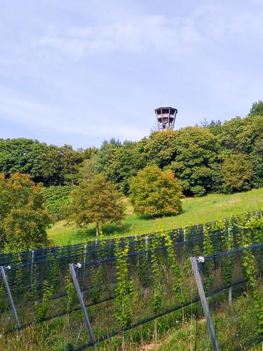 Wanderung von Zehensdorf zur Weinwarte in St. Peter am Ottersbach