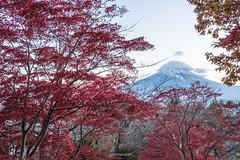 JAPAN.2019.079