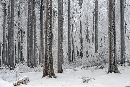 *winter forest*