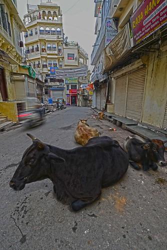 Fast & Slow in Udaipur DSC_6123