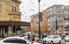 Pigeon corner