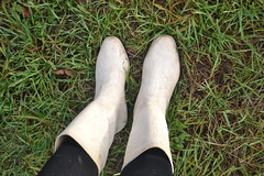 341 -- White wellies from Hevea -- Rubberboots -- Gummistiefel --Hevea Regenlaarzen