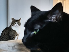 Amelia and Martha #cats