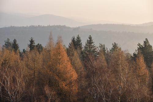 Brume sur les Vosges du Nord