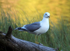 Gull in wilderness