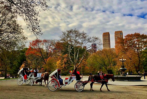 Horse & carriage - Central Park, New York City