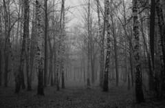 Мрачный лес / Dark forest