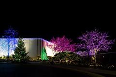 2019 National LDS Temple Christmas Lights  (189)4