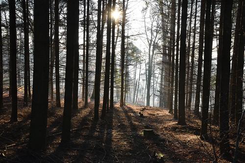 La forêt plénitude