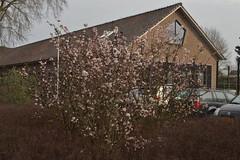 Bloem voor een huis (136FJAKA_3153)