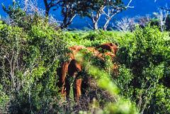 Slide copies April 1992, Kenya