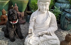 Benni and the Buddhas