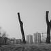 Three Trees, Yuan Dynasty City Wall Park, Beijing
