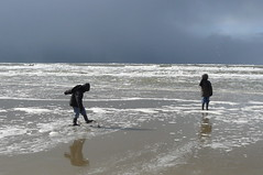 Texel 2008