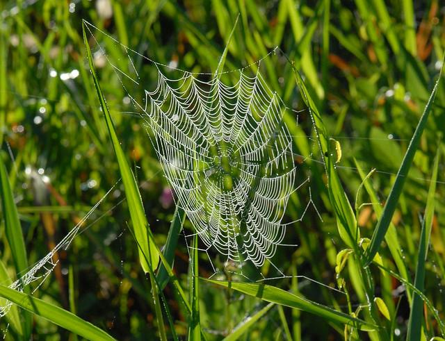 Spider web, Corkscrew - 2007 Aug 26