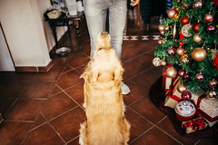 Young dog owner enjoying at home with his pet. Friendship between man and dog. Christmas concept.