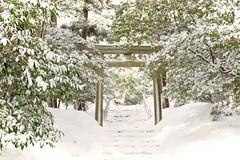 Yahiko Shrine's torii