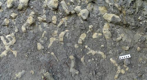 Burrows (Thalassinoides sp.) - Formación Cuevas Labradas (Lias) - Arroyofrío, Jurisdicción de Dehesa de Santiago (Albacete, España) - 02