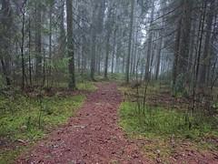 Hovskogen Røtter