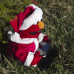 Elmo's gotta check his Twitter feed!