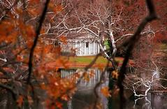 "Cincinnati - Spring Grove Cemetery & Arboretum ""Fleischman Mausoleum Behind The Sycamore Tree"""