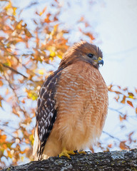 Colleyville Nature Center bird images