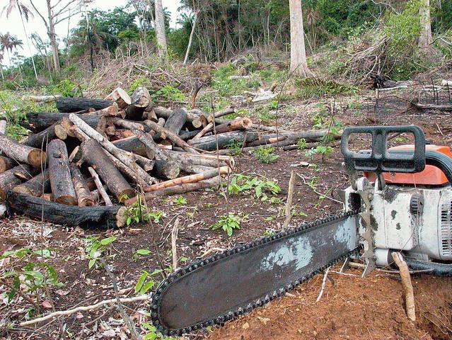 Região de Xapuri (AC) registra índices de desmatamento e violência que remetem à época do assassinato de Chico Mendes - Créditos: Arquivo/Agência Brasil