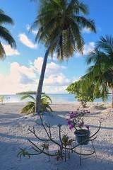 Pink flower on the bare white sand | Fleur rose sur le sable nu