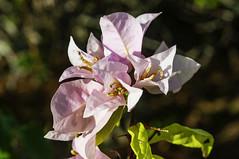 Cuban Flora and Fauna