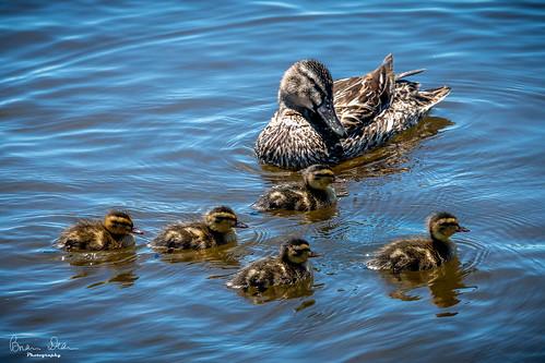 Photo walk around Lake Rotoroa, Hamilton, NZ