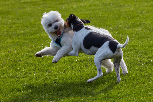 At the dog playgorund – Lenny and his bff